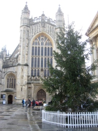 Abbey Churchyard tree.