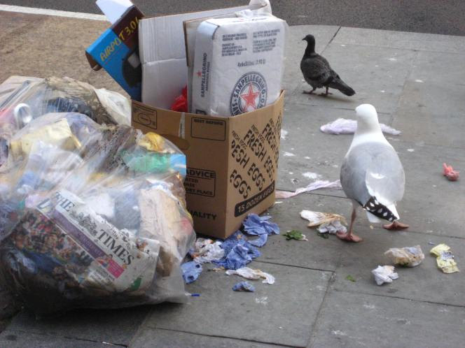 Gull measures to go to Council in New Year