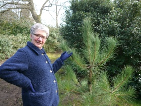 Audrey beside the pine planted in Royal Victoria Park in 2011 to commemorate the suffragettes at Eagle House.