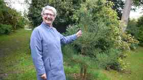Audrey Woods beside the young pine tree in Royal Victoria Park.