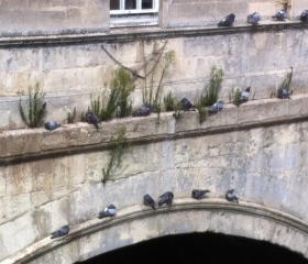 Closer look at the weeds on Pulteney Bridge.