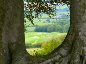Tracy Park golf course seen through a gap in the beech trees