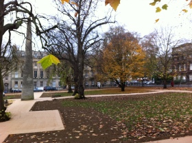 The tree is STILL there - as of Monday - and still covered in autumnal glory.