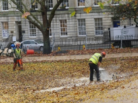 Finishing off the felling of the Queen Square hornbeam.