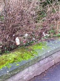 Rubbish thrown over the wall into Sydney Gardens