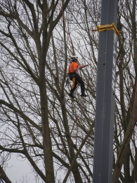 A tree surgeon at work above the North Quay