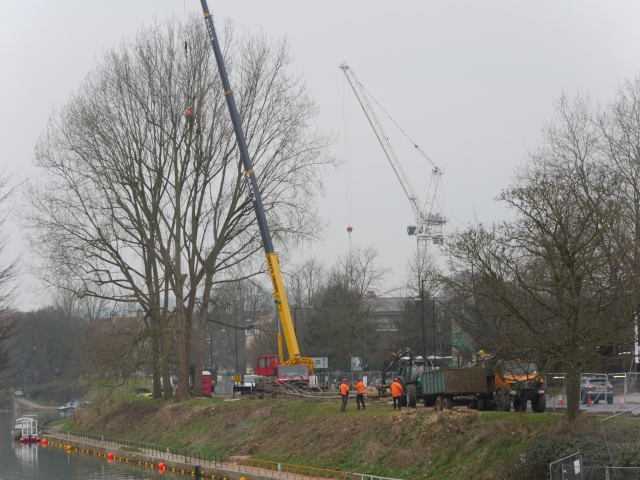 The huge crane that is lifting down the cut branches of these giant poplars.