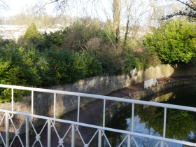 Should the canal be opened up to view by removing shrubbery?