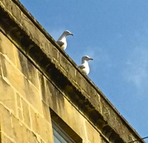 Oh you 'beautiful' gulls.