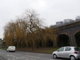 The willows beside the viaduct. Maybe they need a tree protection order?