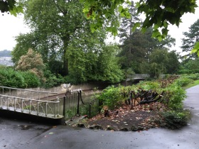 Two dead and dying conifers beside the Coalbrookdale iron bridge have been taken down.
