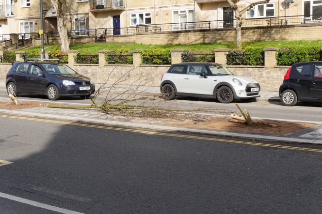 London Road trees destroyed in hit and run.