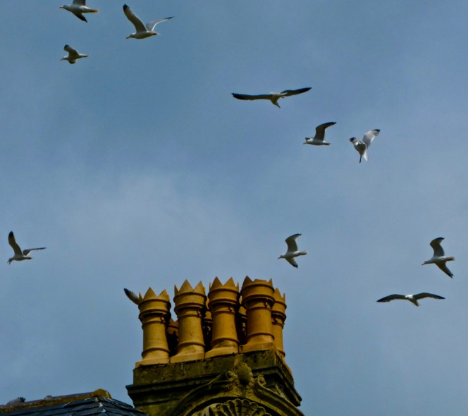 Council gives support to University's gull researchproject