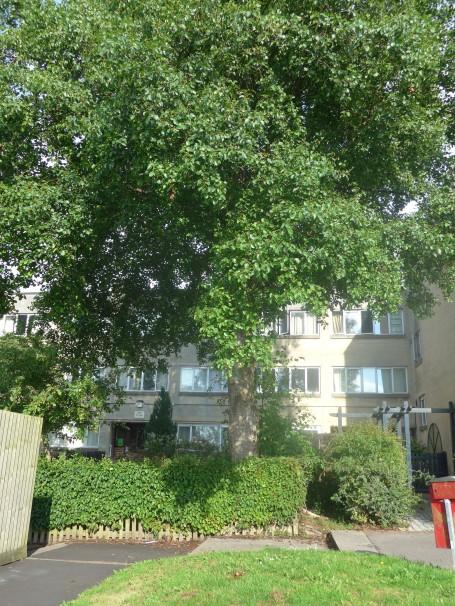 Dunster house flats 2