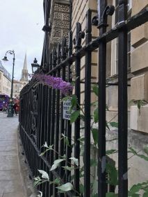 Guildhall buddleia and the new monolith.