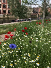 Blooming lovely – but no bridge?